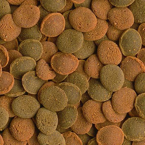 tetra Корм основной с креветкой для плотоядных, травоядныхдонных рыб Tetra Wafer Mix таблетки 1000 мл 204256